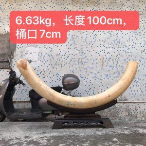 猛犸象牙牙摆原皮天然原材料牙摆